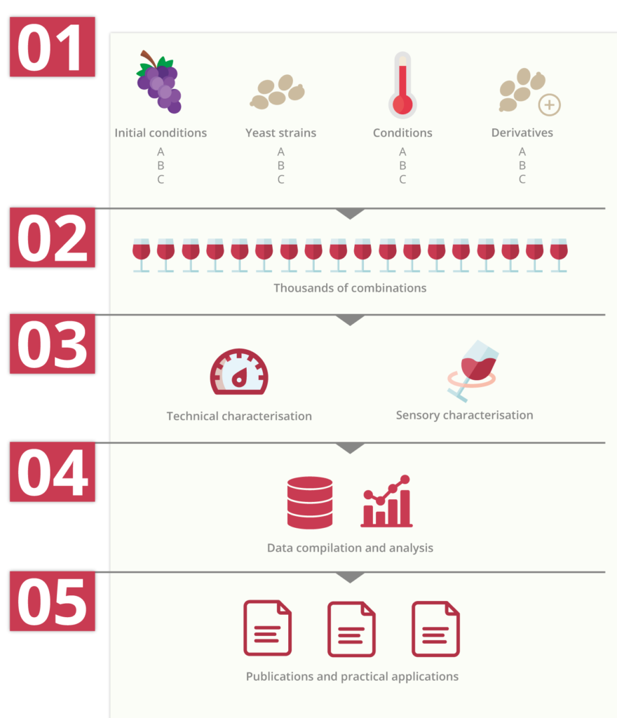 infography : from yeast strains to wine sensory characterisations